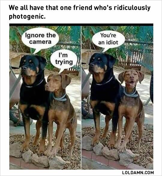 funny photogenic friends