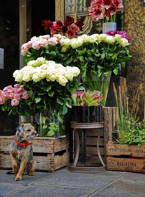 no se si me gusta el perro...las rosas...o las cajas de madera antiguas..creo que todo