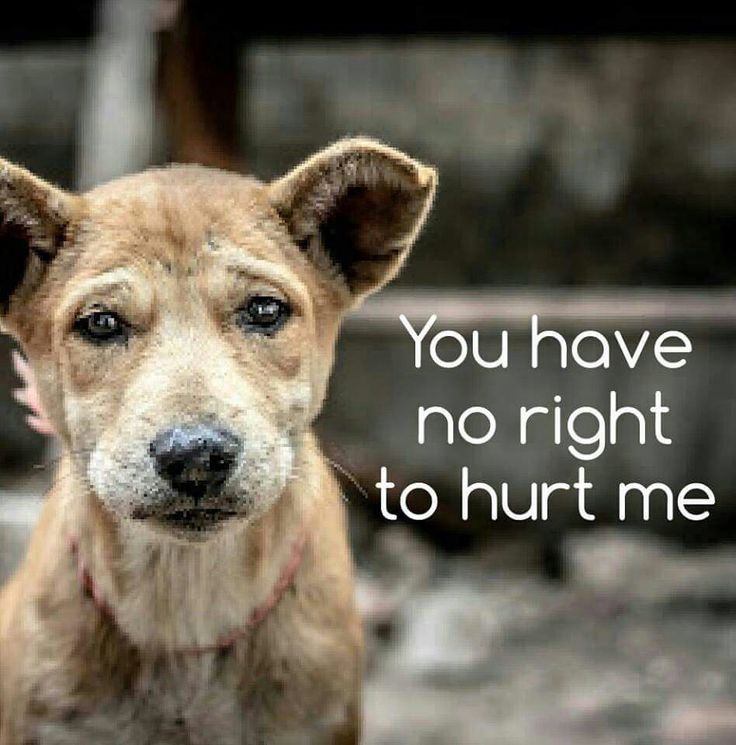 No living creature deserves to be abused. Help put an end to animal abuse.