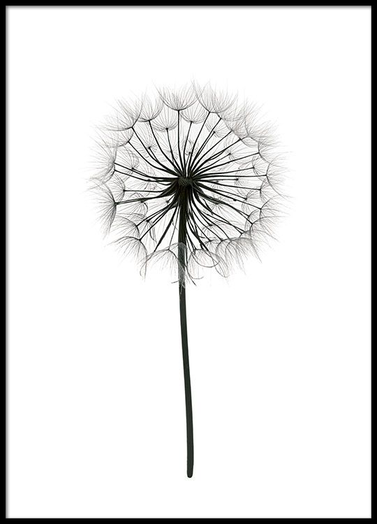 Poster with black and white photograph of a dandelion