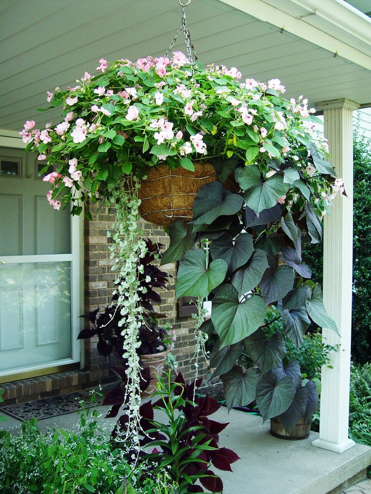 How to grow beautiful hanging baskets Use