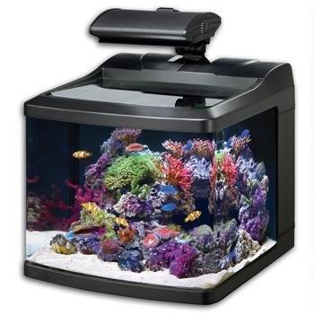 oceanic 36015 biocube hqi aquarium 29gallon oceanic36015 - Kopfteil Des Aquariums