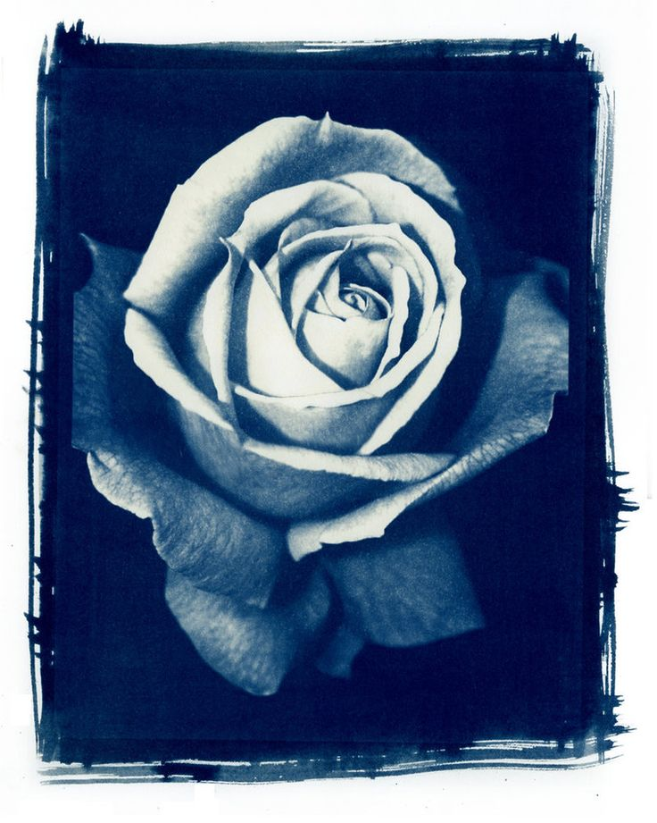 Cyanotype by FullofSecrets on DeviantArt