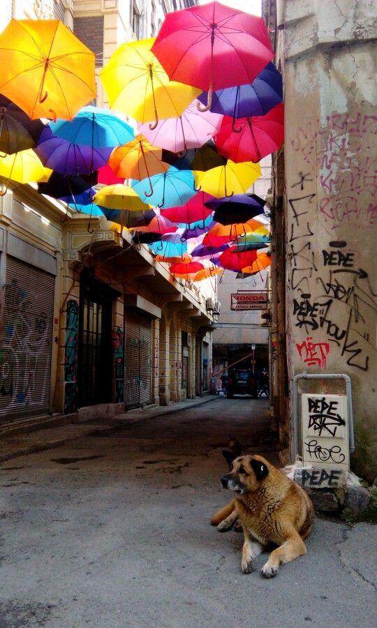 #dog #umbrella #istanbul