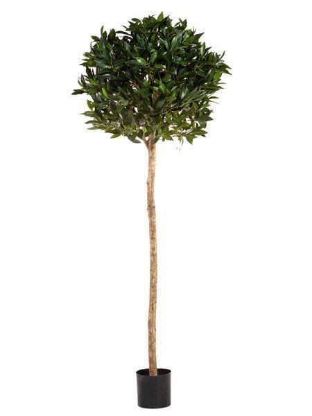 Green Laurel Ball Tree (Silk)