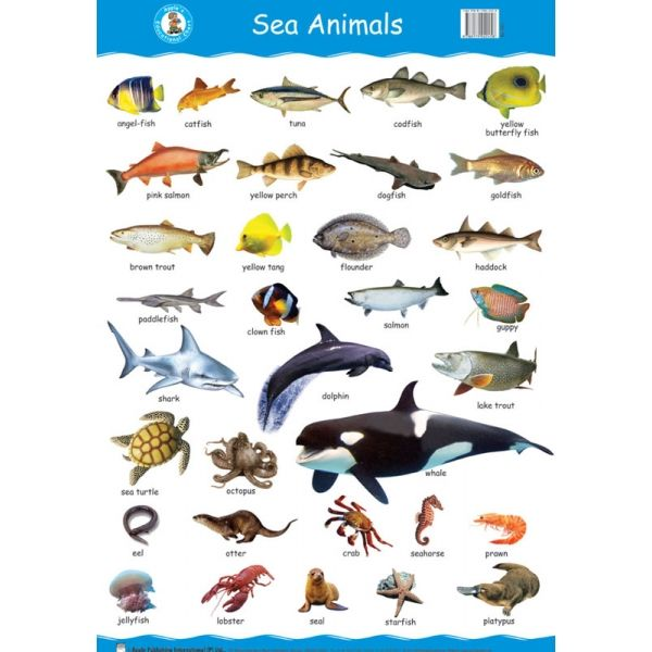 Sea animals wall 600 600 sea animals list for All fish names