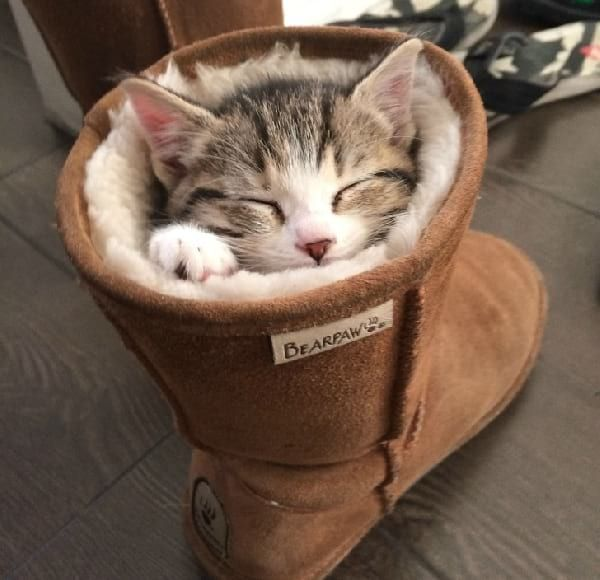 31 Cats Photos Sleeping That Will Make You Smile For The Day.