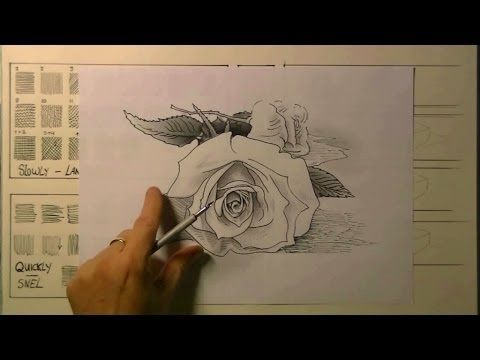 How to draw a Rose in pen and ink - YouTube