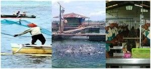 Memajukan Pembangunan Perikanan