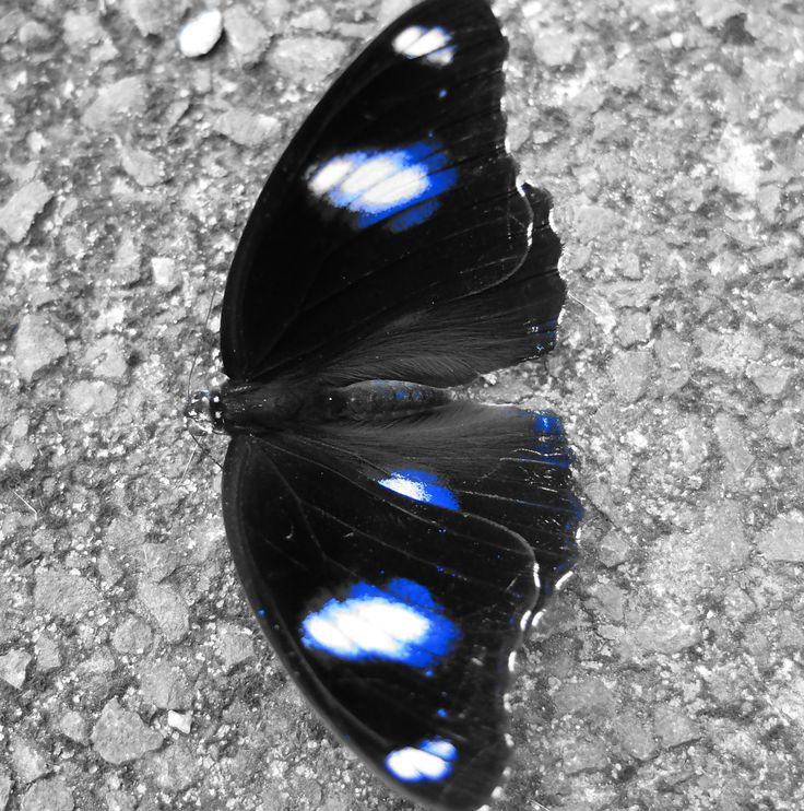 roarforpaws.com  Beauty of the Butterfly