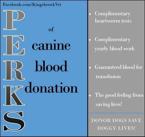 If saving lives isn't enough, check out all the amazing perks you get when your dog becomes a blood donor. #AnimalHospital #Veterinarian #Pets #KAH #FrederickMaryland #KingsbrookAnimalHospital #Vet #BloodDonation #CanineBloodDoners #CanineHeroes #BlueRidge #BloodBank #Perks