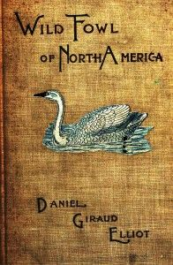 Design - Book Cover - Wildfowl of North America
