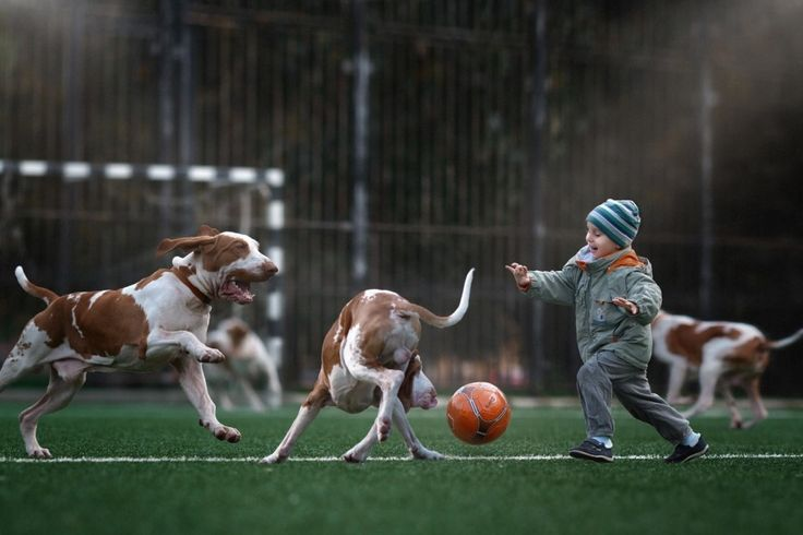 """Seliverstoff did another shoot with a child featuring big dogs, and told BuzzFeed News that he was """"deeply touched"""" by the work. That was four years ago and he's been a dog photographer ever since. 
