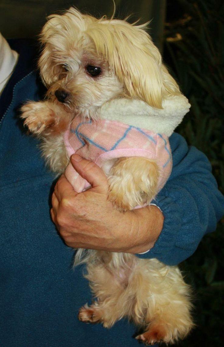 Adopt Diane (joy) on Puppy mill rescue, Adoption, Animals