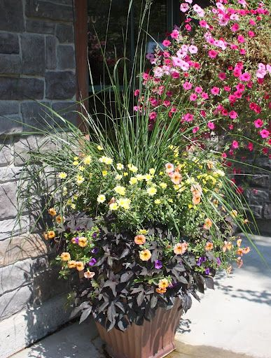 how to add manure to potted plants