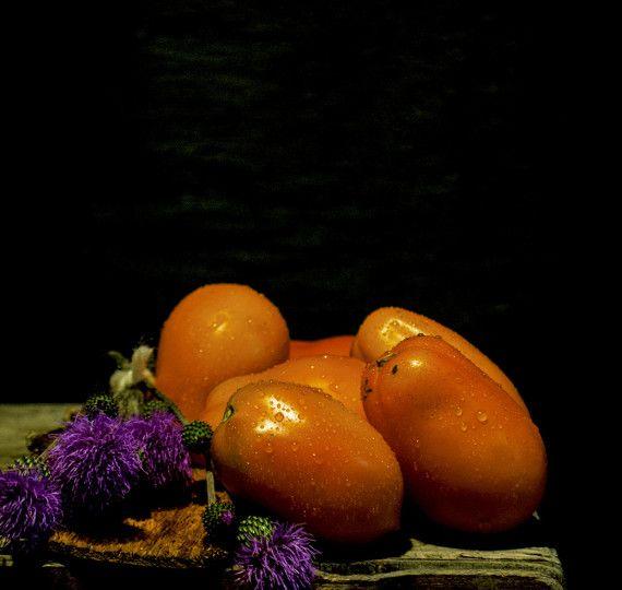 Seminte Rosii Prunisoare Portocalii