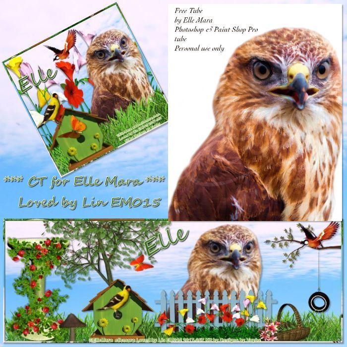 Falcon - Tube at www.ellemara.com