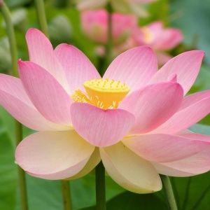 Садовые цветы: 8 самых п…