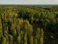 Les producteurs de pins Douglas veulent séduire architectes et constructeurs
