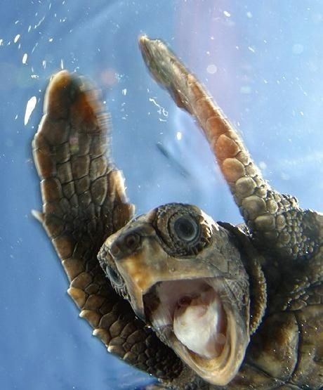 IT's FRIDAY BITCHES!!!  ~National Geographic Turtle slap in 3,2,1...