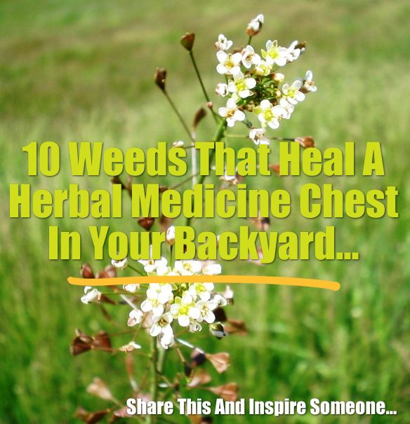 Don't kill, spray, tear up, or destroy the weeds in your garden, yard, and fence rows. Many of them are actually highly-regarded, widely-used, and extremely-valuable medicinal herbs! What could be easier than growing an herb garden with no effort? Of course, you'll have to harvest your edible weeds,