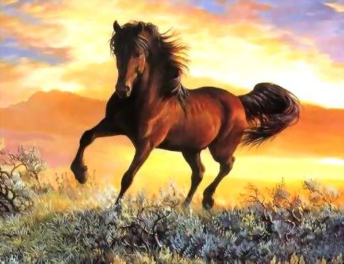 Cavalo Marrom cavalgando no pôr-do-sol