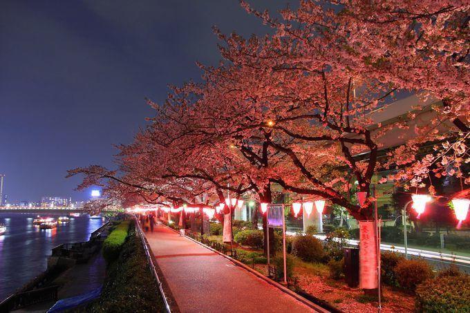 Top 8 Sakura Avenues In Tokyo You Cannot Miss Tokyo Japan Travel Tokyo Sakura