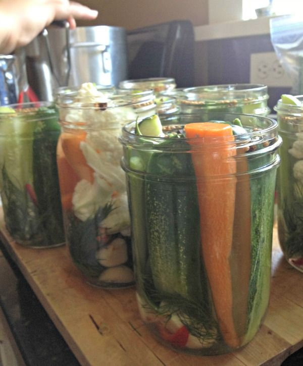 Quick Refrigerator Dill Pickles are the BEST I've ever had. So easy and SO delicious!! www.mountainmamacooks.com