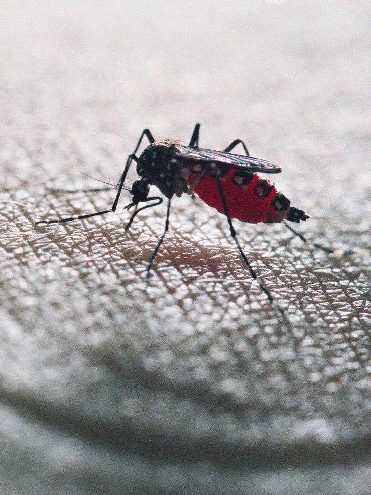 L'invasion des moustiques tigres, c'est pas du cinéma