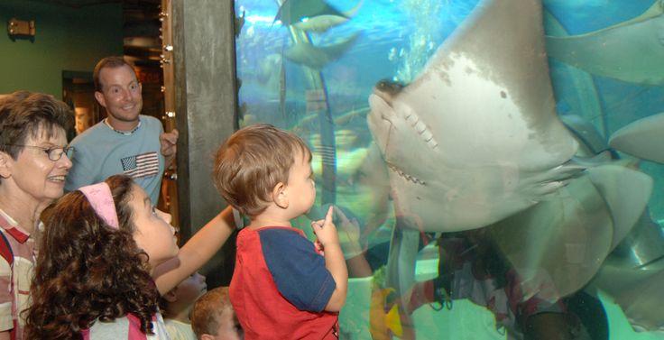 Audubon Aquarium of the Americas - New Orleans | Audubon Nature Institute