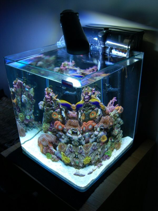 17 best images about saltwater reef tank on pinterest for Nano aquarium