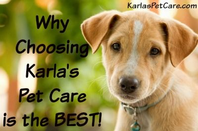 Why Choosing Karla's Pet Care's Professional Pet Sitting and Dog Walking Service is Better than Hiring a Relative or Neighbor