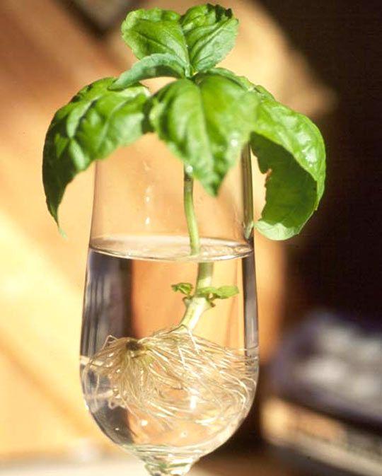 Hydroponics | DIY: Garden; Compost & Hydroponics ...