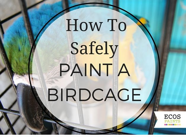 Looking to paint a birdcage but don't know what to use for the bird's health and safety? ECOS Paints makes non-toxic, pet-safe finishes for your birdcage.