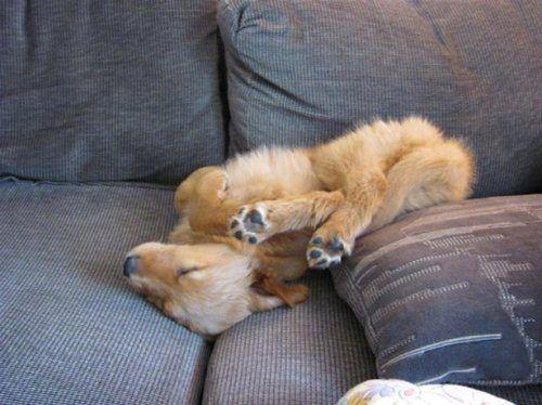 Спящие собаки / Питомцы