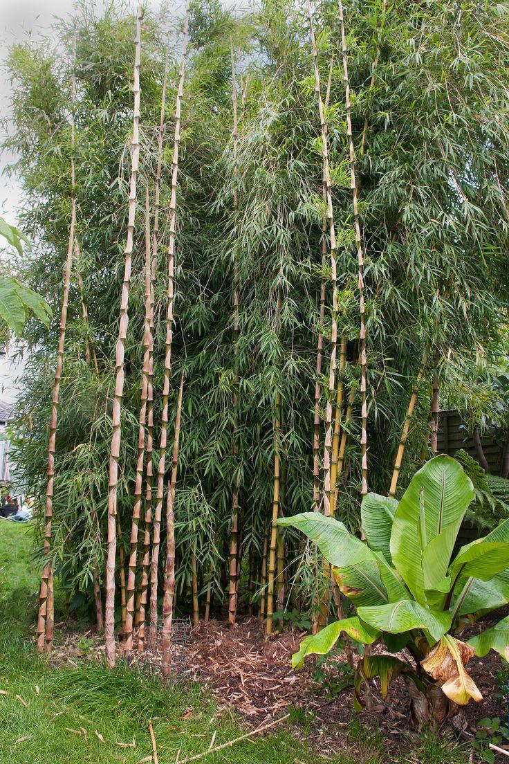 7 besten Bambus Bilder auf Pinterest