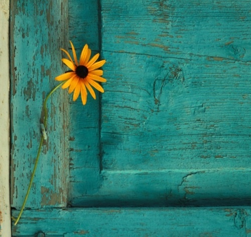 tranquil: Flowers Fields, Blue Doors, Yellow Turquoi, Country Flowers, Rustic Doors, Sunflowers, Country Life, Aqua Doors, Sun Flowers