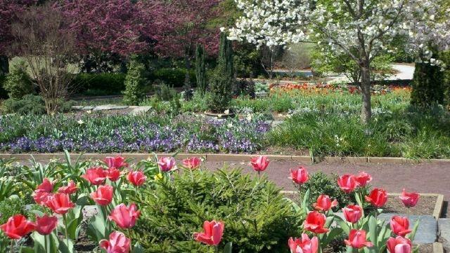 Sarah P. Duke Gardens in full spring beauty!