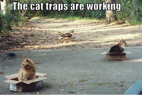 Cat Traps!