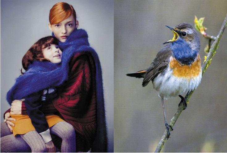 Birds give flight to our imaginations, via Li Edelkoort @ TrendTablet autumn/winter 2011-2012.