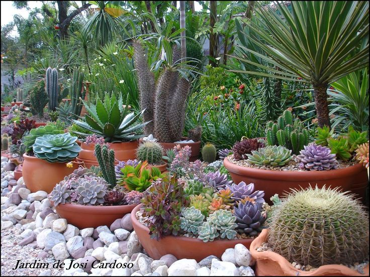 1230 best images about endless succulent ideas on pinterest for Cactus garden designs