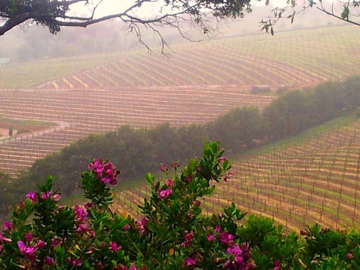 Cape Town Wine Tasting Day Trip - Beau Constantia Wine Farm View