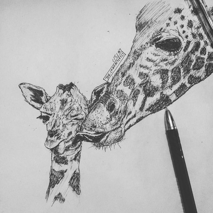Giraffe .. mother and the son.. ref drawing . . . #sketchbook #sketching #sketch #drawing #art #artsy #artist #giraffe #baby #artwork #doodle #doodles #characterist #like4like #draw  #instaart #instagood #instadaily #illustration #animal #cool #son #artwork #artoftheday #pen #followforfollow #love  #blackandwhite