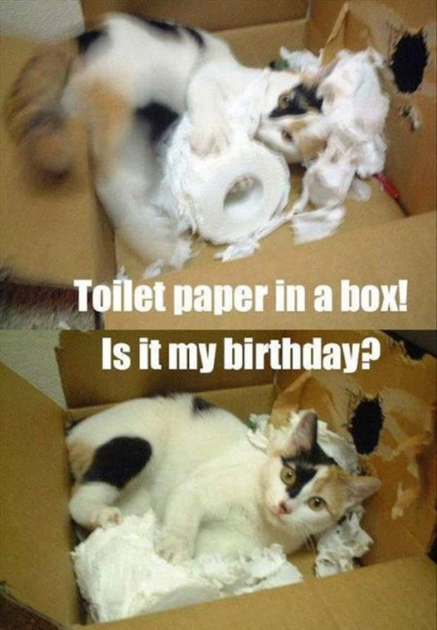 Dump A Day From Kittens To Lions, All Cats Love Cardboard Boxes - 30 Pics