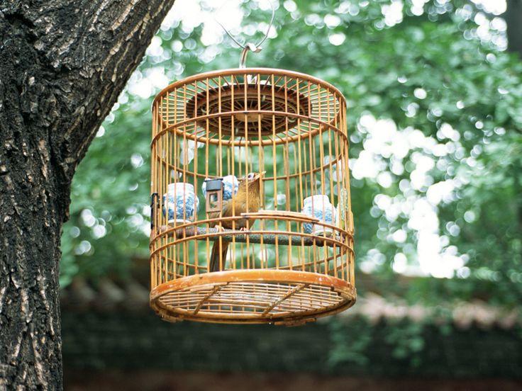 La afición a los pájaros es algo muy extendido en China.