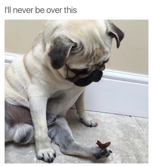 pinterest: @jaidyngrace This dog who was captured in such a pure, innocent moment: | 21 Dog Memes That Will Cure Your Bad Day
