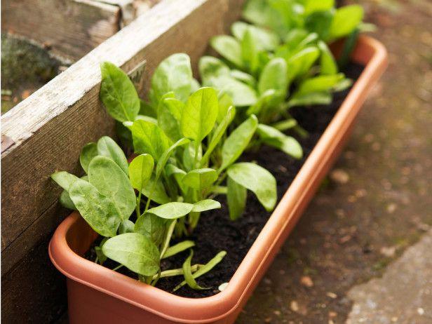 How to Freeze Spinach -> http://www.hgtvgardens.com/freezing/how-to-freeze-spinach?soc=pinterest