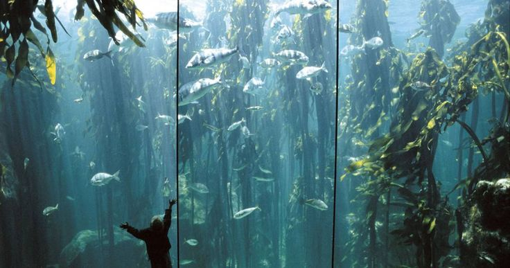 Two Oceans Aquarium http://www.aquarium.co.za/exhibitions/entry/the_kelp_forest_exhibit
