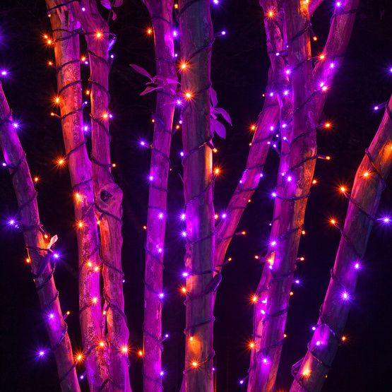 70 5mm purple orange led halloween lights 4 spacing black wire