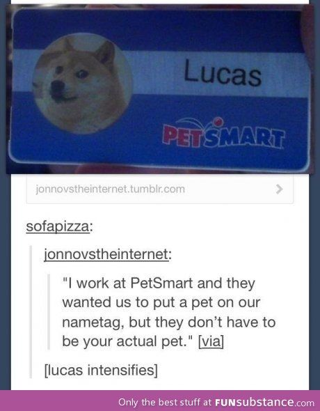 Doge tag this is so tumblr